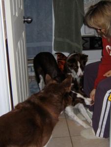 Dog Training on the Loo