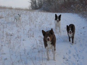 DeCaff, Buzzy (looking handsome as ever), Feature & Encore.