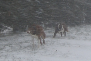 Buzz & Encore out for our Snowing Walk