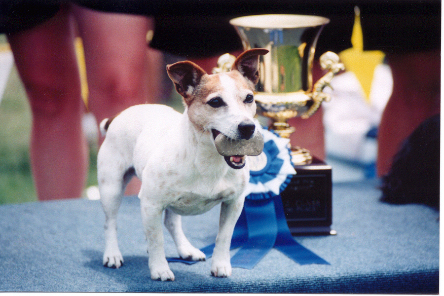 Shelby with a rock, winning of the 1998 USDAA GP Nationals.