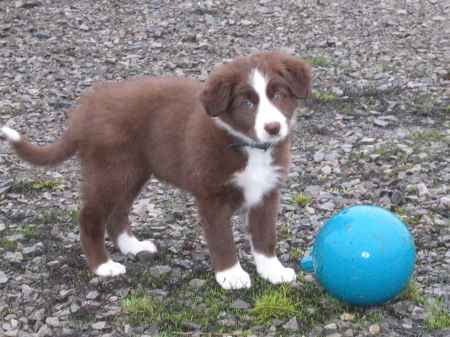 The dawning of Encore's jolly ball obsession at 7 week of age.