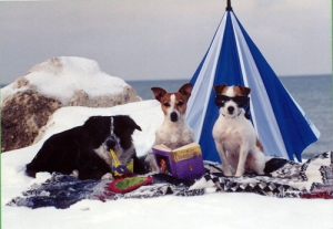 Stoni, Shelby and Twister hamming it up for a Christmas card in the mid 90