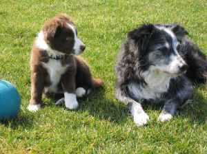 "One of my all-time favourite pictures, one I like to call ""the two legends""  Puppy Encore and Senior Stoni"